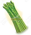 Oregon Harvest for Schools-Asparagus