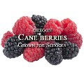 Oregon Harvest for Schools-caneberries