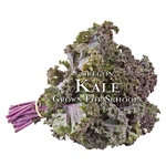 Oregon Harvest for Schools-Kale