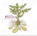 Oregon Harvest for Schools-Potato