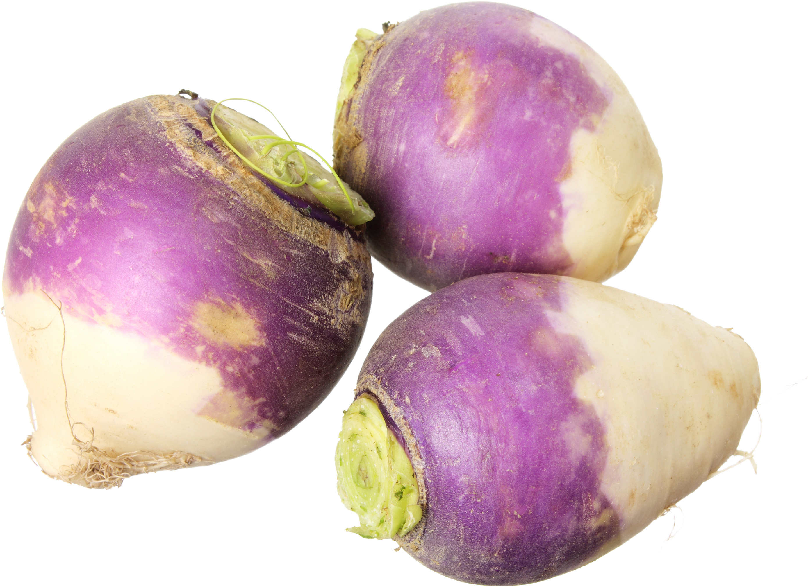 Oregon turnips grown for schools